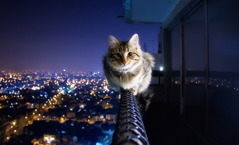 Fearless Cat, photographed by Crazy Ivory
